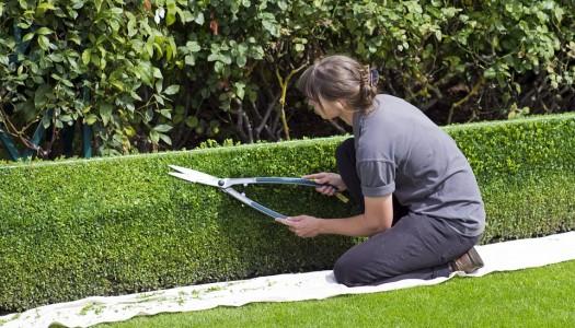 Focus sur le métier de paysagiste élagueur